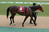 【2012年】宝塚記念予想-注目馬のパドック写真