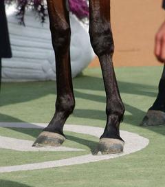 繋標準脚長い