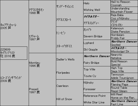 セイウンブラスト5代血統表
