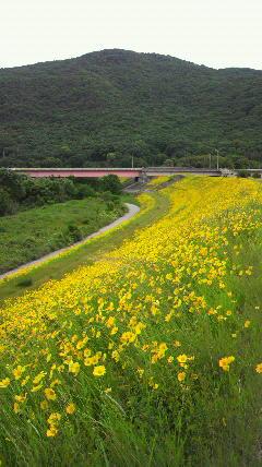 20110527旭川沿い
