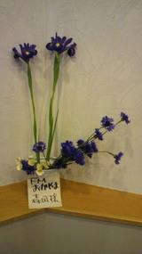 梅田さんの花