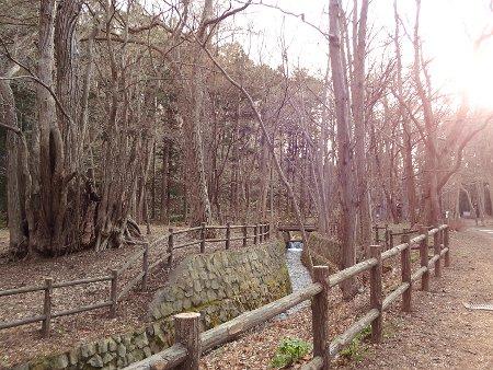 2015春円山公園付近003