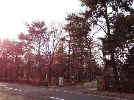 2015春円山公園付近001