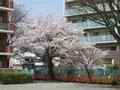 160406matsubarahigashi03