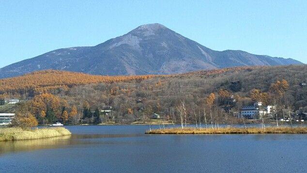 白樺湖と蓼科山と霧ヶ峰 国道152号沿いのカラマツの黄葉 長野県茅野