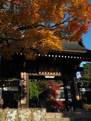 11月の高山~東山遊歩道~