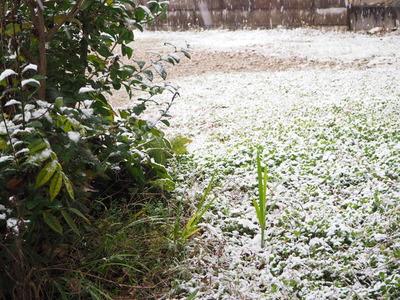 初雪。そして