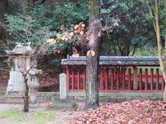 11日吉社・奧の玉垣