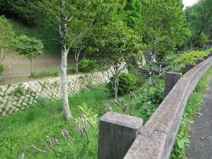 1祥雲寺前本木川ほたるの里上流