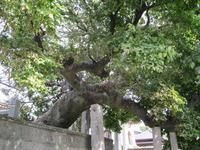 泉福寺榎支え石