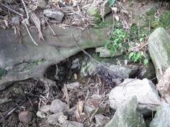 6徳間清水湧水口