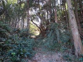 4楢の木坂