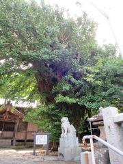 大原神社拝殿・銀杏・狛犬