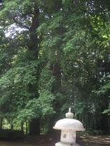 舎利蔵なぎの木1