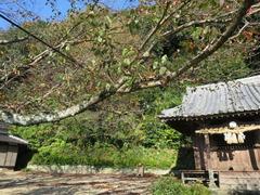 5印鑰神社境内桜樹