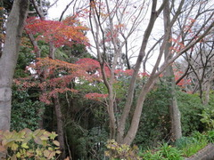1鎮国寺の紅葉