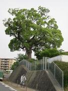 12勝田線沿い