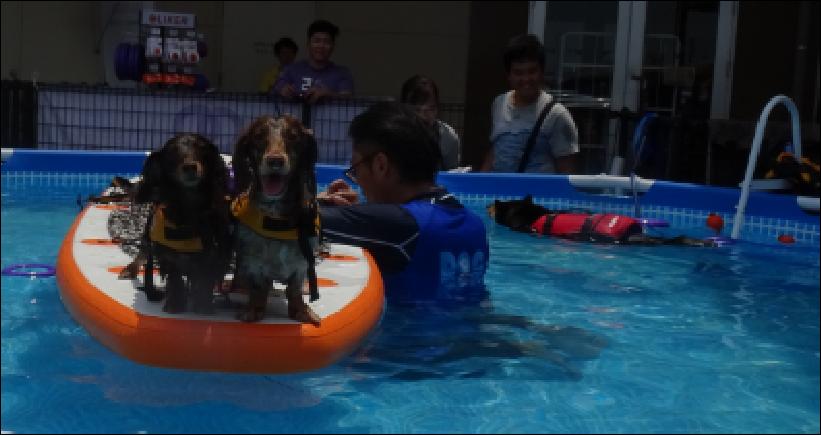 犬プールで気持ち良さそう。