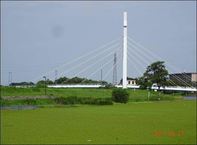 シラコバト橋水藻