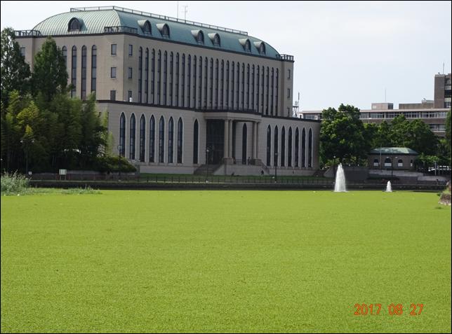 中央公民館前水藻発生