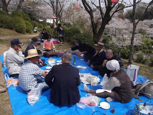 桜花のお花見なら菊池!
