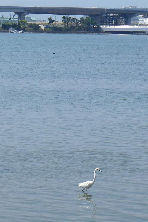 博多湾埋築で生まれた虚構の人工島(アイランドシティ)はリアルな愛ランドか?