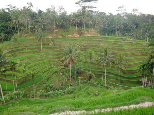 2012海外フィールドワーク:バリ島(ウブド)報告:私のベスト3
