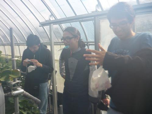 留学生とイチゴ狩り