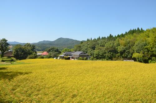 天草で仙人暮らしを堪能されている桂木誠志先輩から季節のお便りが届きました。