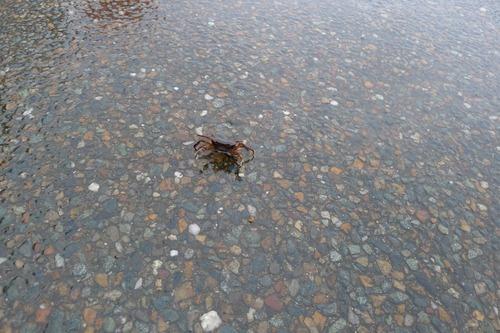 雨中、宇宙の蟹と出逢う