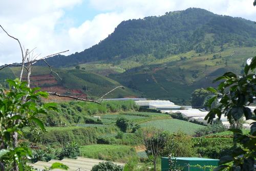 Minh Hanh女史と歩く〜海抜1500mもの高原地帯Da Latはアラビカ種の珈琲豆の産地として名高い!