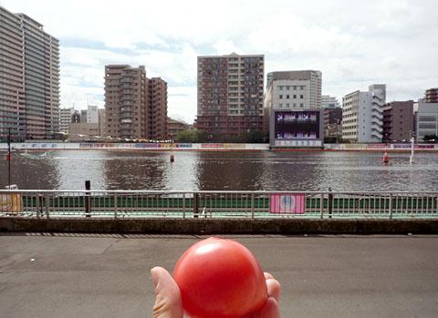 スタンドでトマト@平和島競艇場