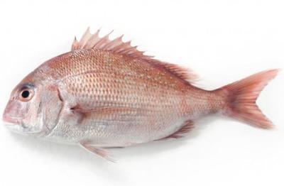 「魚さばく女は無理だ、別れよう」