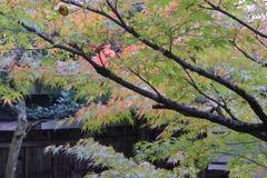 20121102kyouto_oohara 010