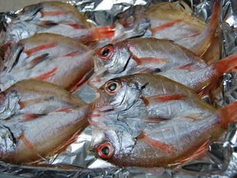 日本海の魚〜♪