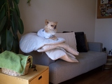 座布団犬2