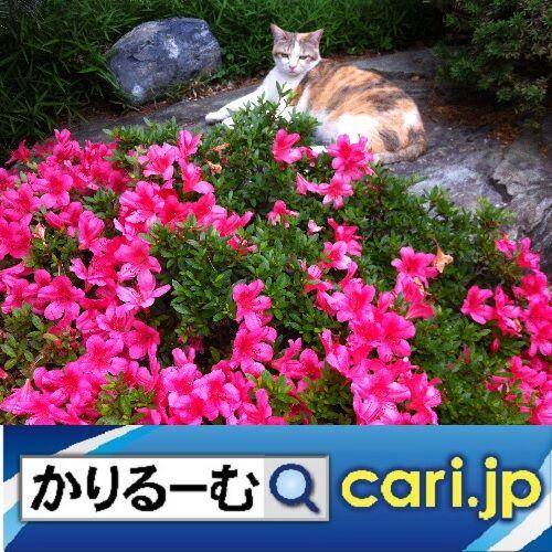 5_catflower191204w500x500