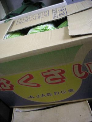 白菜入荷(淡路島)