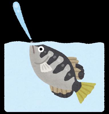 fish_teppouuo_shoot