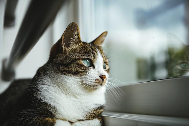 tomcat1582_TP_V