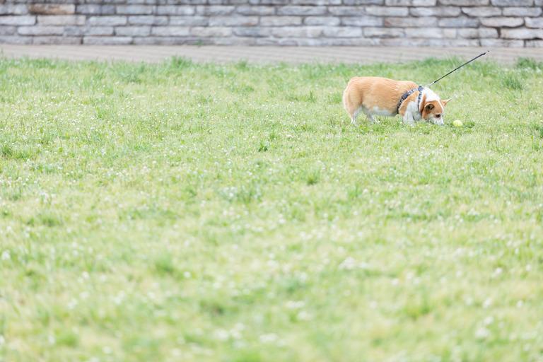 dogGFVL3409_TP_V