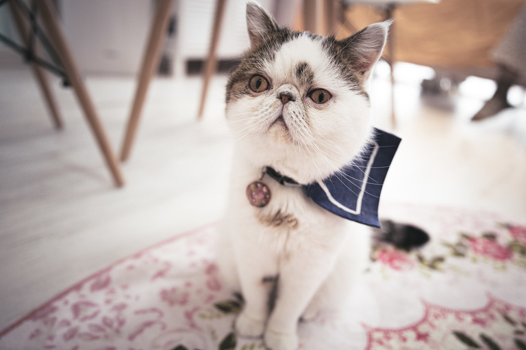 cat458A7708_TP_V (1)