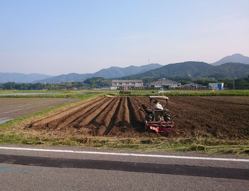 黒豆用の畑