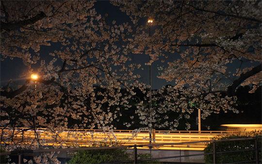 1104_chidorigafuchi01