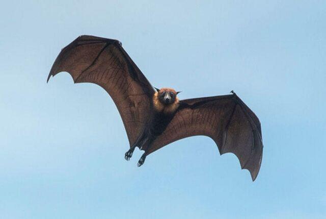 webs200130-bat (640x429)