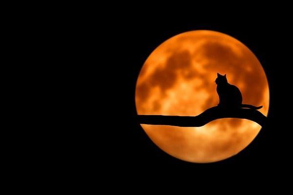 猫に関する不思議な話『猫の墓守』