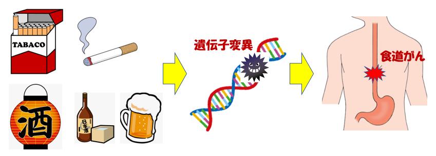 タバコと酒で食道がんのリスク増