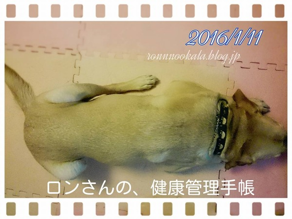 20160111 ドッグ整体前日の事 1