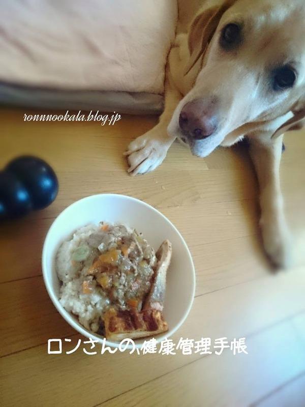 20151007 ロンご飯 留守番 2
