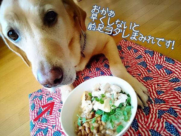20151013 ロンご飯 鶏ムネササミ 3